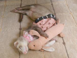うさぎさんのぬいぐるみを抱きしめて眠るフェレット