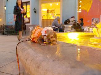 愛知のイタリア村の噴水でポーズを決めるフェレット