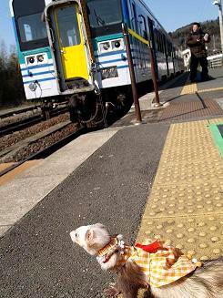 駅のホームで電車を待つフェレット