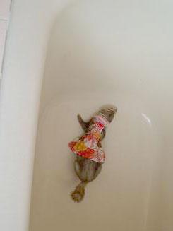 お風呂場のフェレット