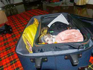 旅行スーツケースの準備OKのフェレット