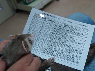 フェレットの血液検査結果