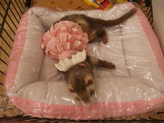 フェレットの新品ベッド