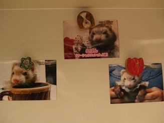 フェレットの写真を冷蔵庫に貼ってみる