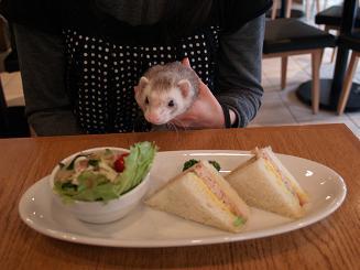 サンドイッチを食べたいフェレット
