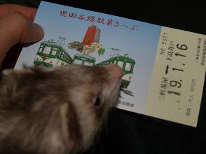 フェレットが世田谷線という電車に乗りました。