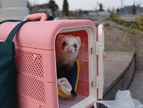 フェレットのピンクのキャリーケース