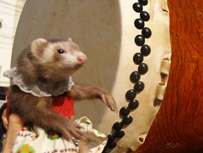 太鼓をたたくフェレット