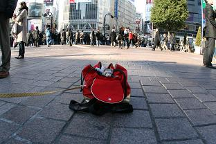 渋谷のど真ん中にフェレットがいました