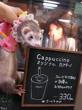 移動販売のコーヒーを注文するフェレット